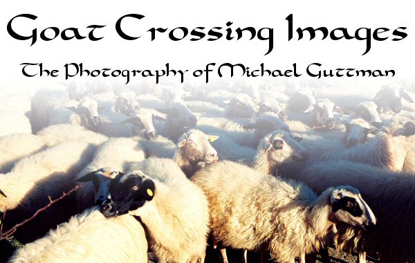 Goat Crossing Images - The Photography of Michael Guttman